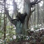 DSCN1079杉1
