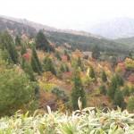 DSCN7601天然杉と紅葉