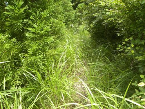 DSCN5470ススキで埋もれた出会いの先林道