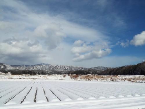 054雪田