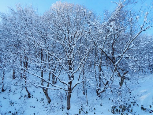 107雪木