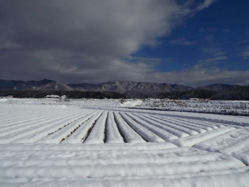178雪景色