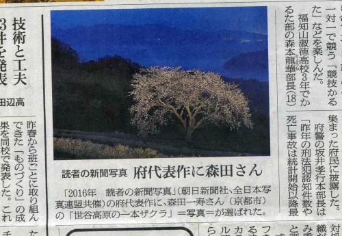 とも033桜