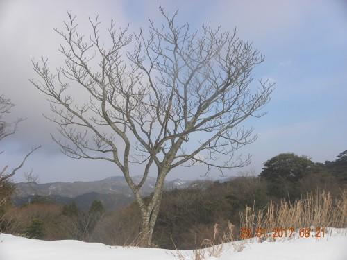 スキー場横で出迎えてくれたカラスザンショ