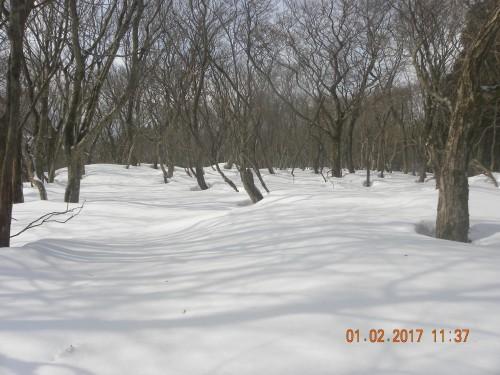 雪面に樹木の影が綺麗に