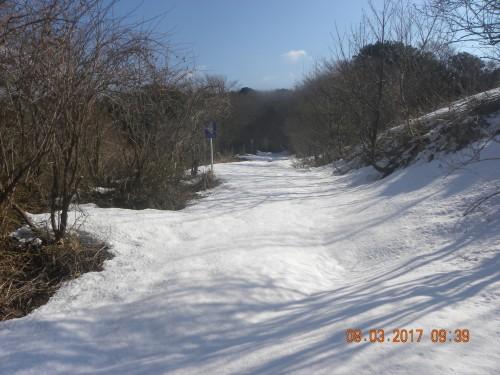 綺麗な雪の林道