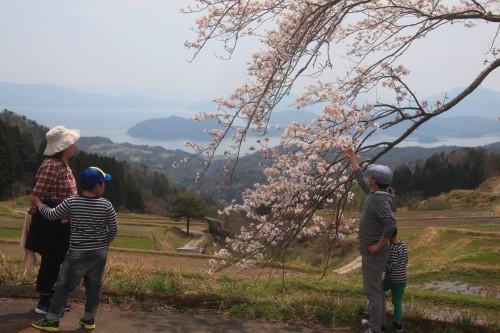IMG_2041桜