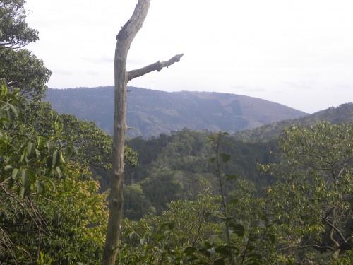 杉山羽ばたく森の遠望