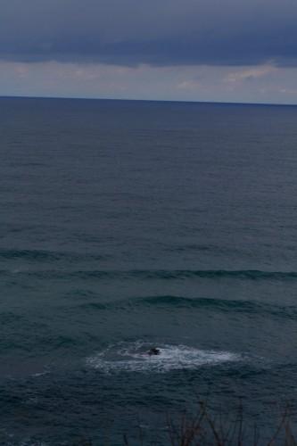 IMG_6897.jpgたんご海
