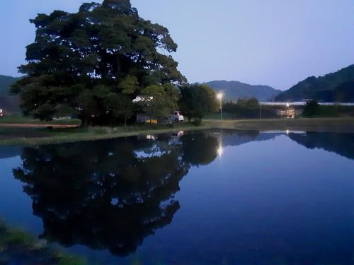 20210430_190710巨樹水鏡