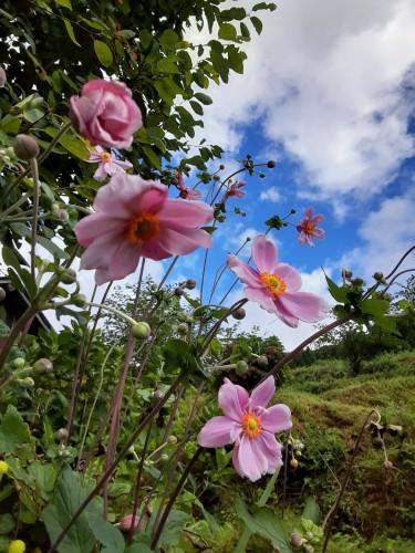 20210909_091723花が秋